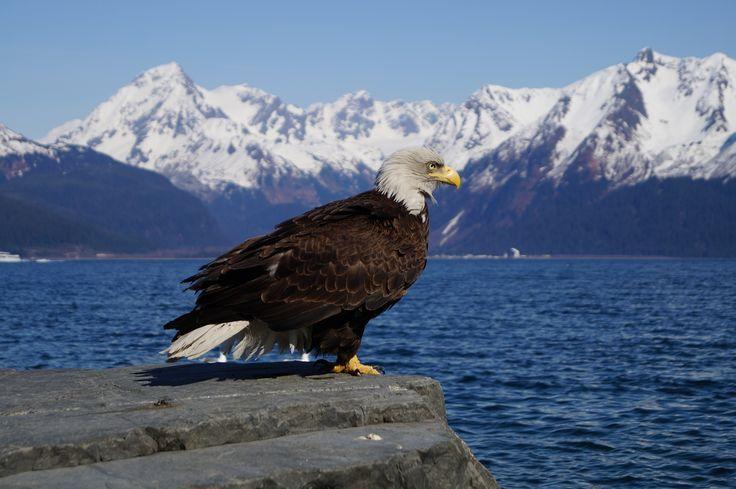 Alaska, la última frontera | Fernando Antoñanzas