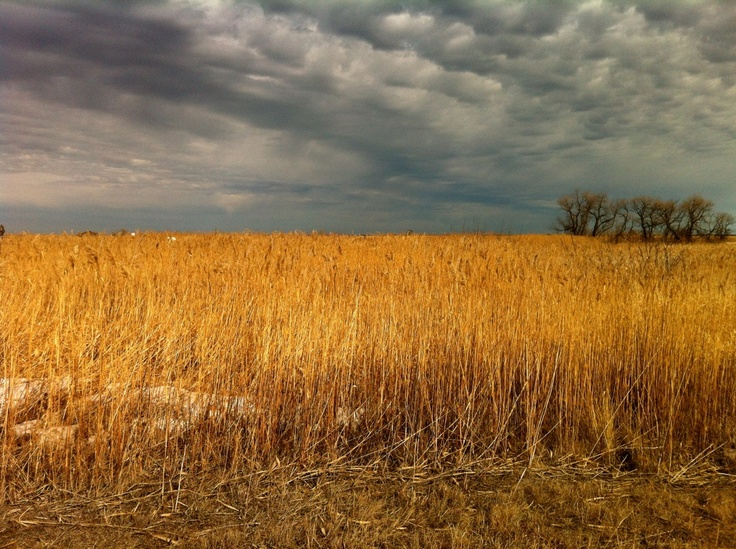 oak hammock marsh, manitoba (early thaw, march 2012)