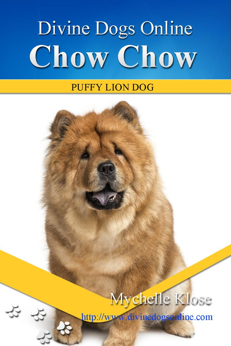 "This beautiful dog is big and strong and is also called ""Songshi Quan"" which means ""puffy-lion dog"". He has a mind of his own and can be quite stubborn. Training is needed and older children are preferred. Originally from the Mongolian Region of China he was bred to be an all purpose dog. In this Chow Chow book we will explore their temperament, their health issues and their origins. $6.98 #ChowChow"