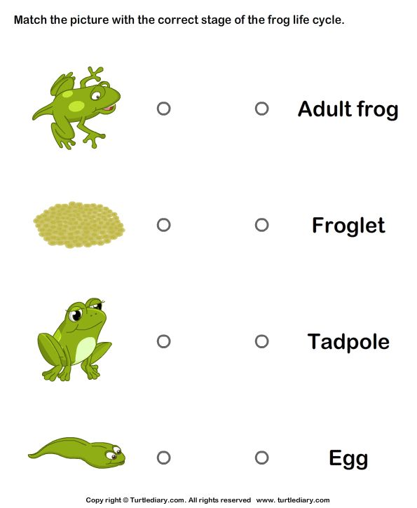 Image from http://cdn.turtlediary.com/worksheets/science/kindergarten/frog-life-cycle/frog-life-cycle-match-pictures-with-correct-name/question/frog-life-cycle-match-pictures-with-correct-name-1.png.