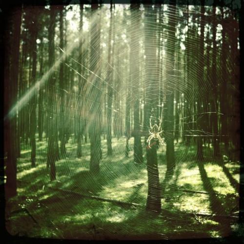 Wald bei Biesenthal