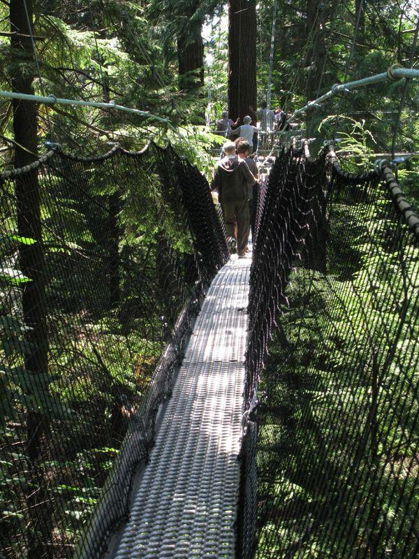 Greenheart Canopy Walkway at UBC Botanical Garden