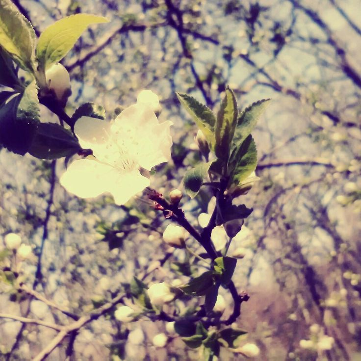 #youngspring #gorgeousnature