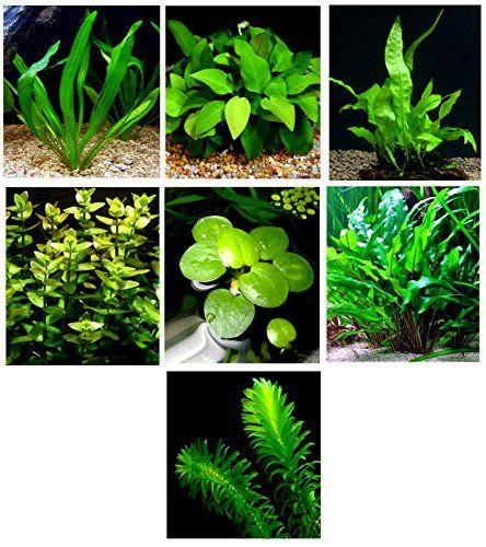 25 best ideas about live aquarium on pinterest plant for Live plants for betta fish