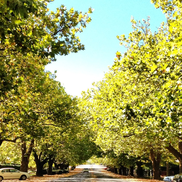 My favourite street in Orange NSW  Looks great any time of year.