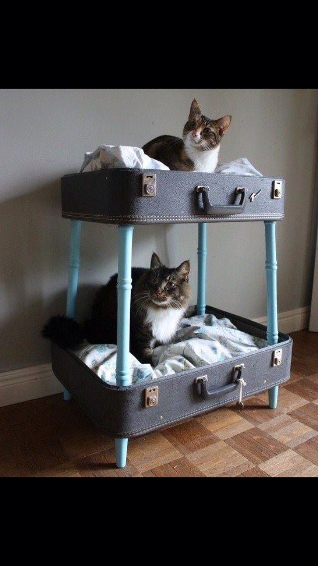 Kitty Cat Bunk Bed....