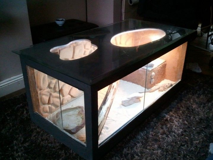 Bearded Dragon Coffee Table Reptile Forums Bearded Dragon Pinterest Bearded Dragon