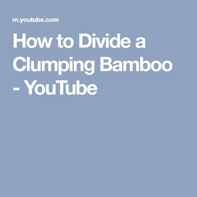 How to Divide a Clumping Bamboo - YouTube