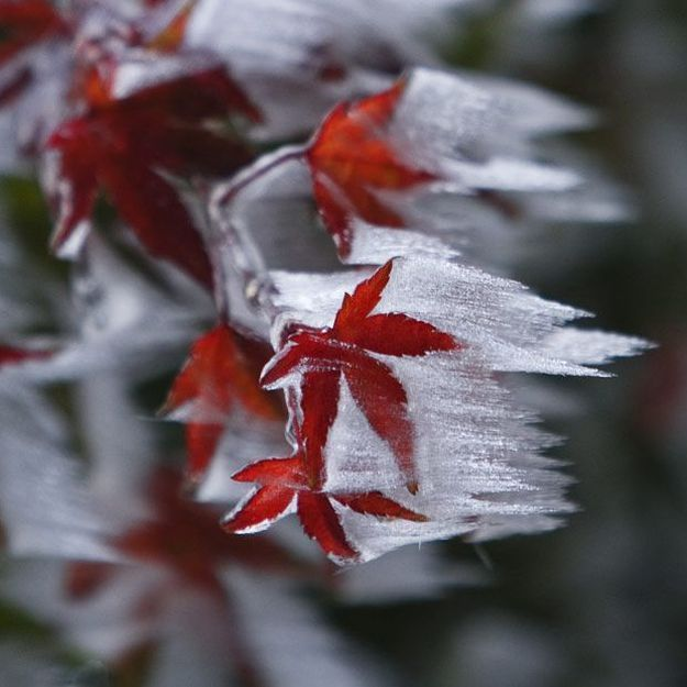 This is one of my all time favorite leaves stuck in a winter storm! So cool!