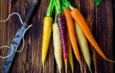 Coltivare le carote arcobaleno