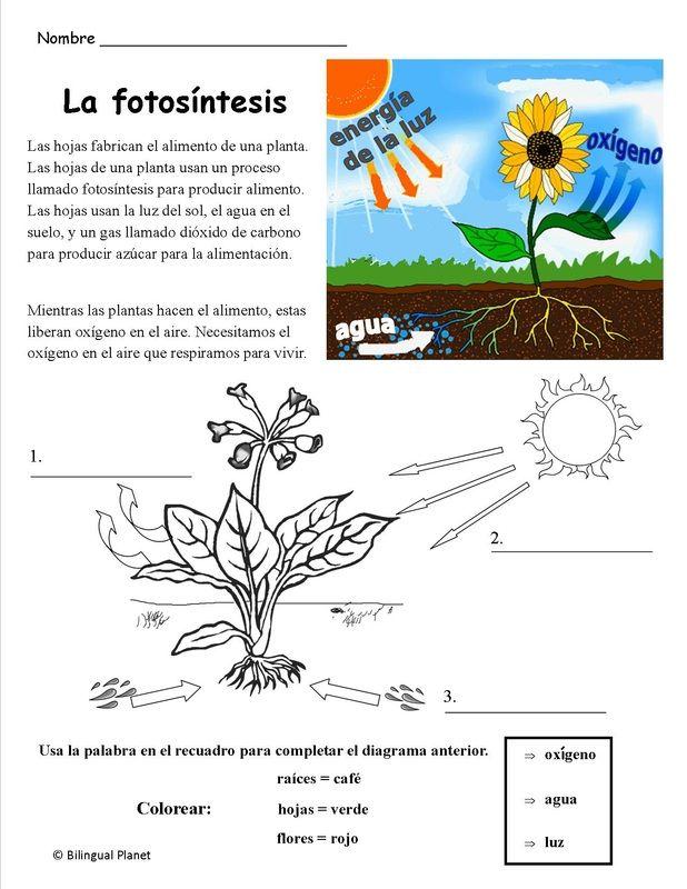 Resultado de imagen para fotosintesis para imprimir