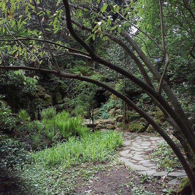 Arboretum Mlynany 🌿🌳
