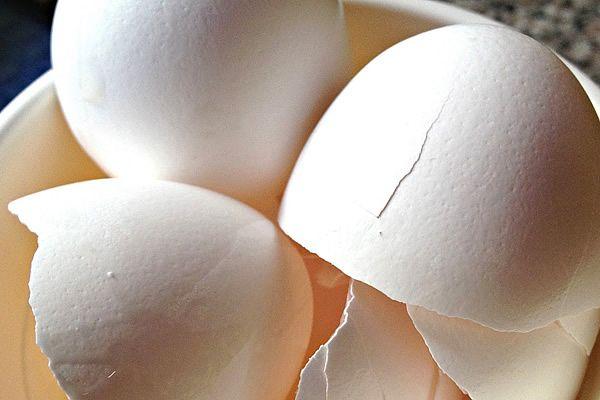 como-hacer-harina-de-cascara-de-huevo-para-plantas