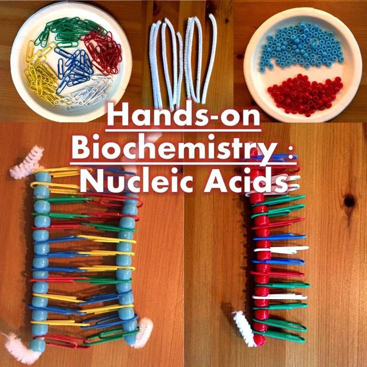 High School Science With Mrs. Lau: Hands-On Biochemistry Bundle Update! Brand new Nucleic Acids activity