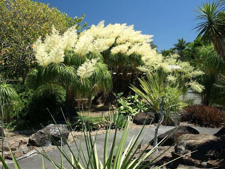 La Beucarnia