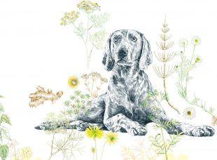Krebs zählt zur häufigsten Todesursache bei Hunden. Diagnostik und Therapie haben sich jedoch rapide verbessert.