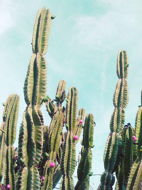 Cactus, via Flickr.