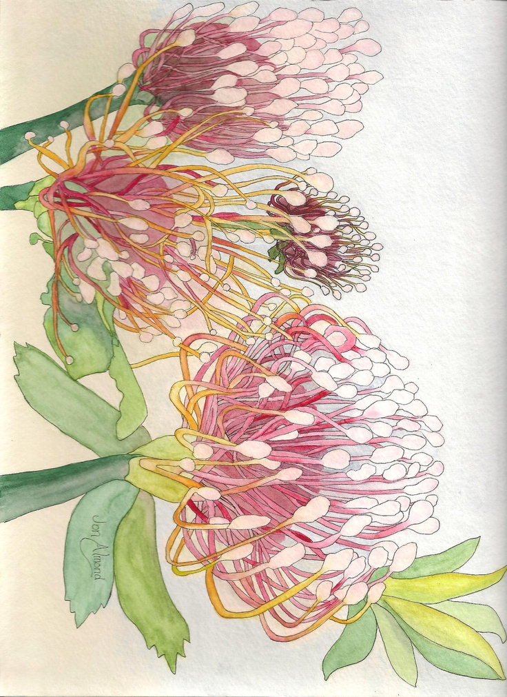 Flowers of South Africa in watercolor note cards.. $6.00, via Etsy.