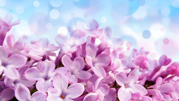 wallpaper flores - Buscar con Google