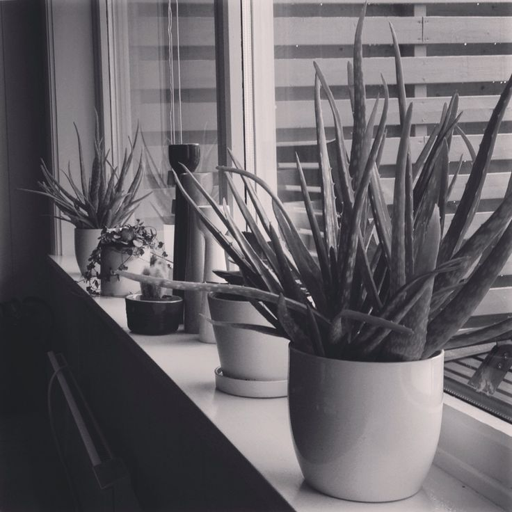 Turning into a crazy plant lady