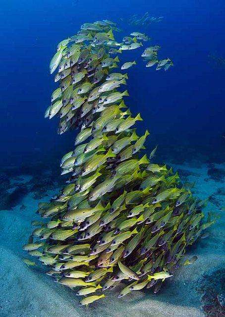 Sodwana mellow yellow reef!