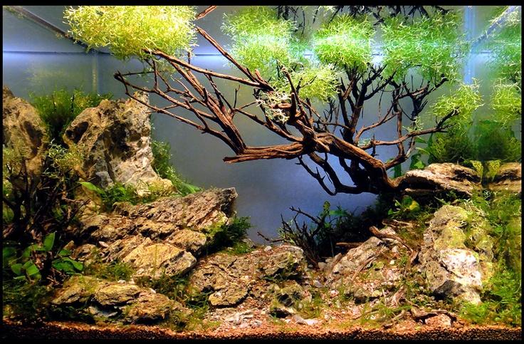 Results of the Minitank Contest - Nano Aquariums - Aquatic Plant Central: Aquarium Art, Nano Aquarium, Aquaria Aquascaping, Awesome Aquascaping, Aquario Projecto, Aquatic Plants, Aquarium Ideas, Plants Central, Plants Aquarium