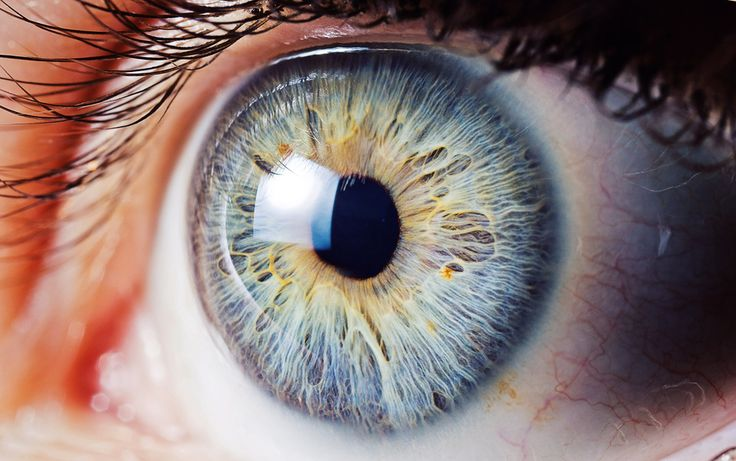 Eye | Iris | Pupil | 目 | œil | глаз | Occhio | Ojo | Color | Texture | Pattern | Macro | Dorte's Eye by Roy Francis