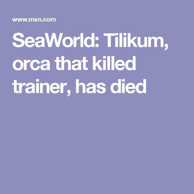 SeaWorld: Tilikum, orca that killed trainer, has died