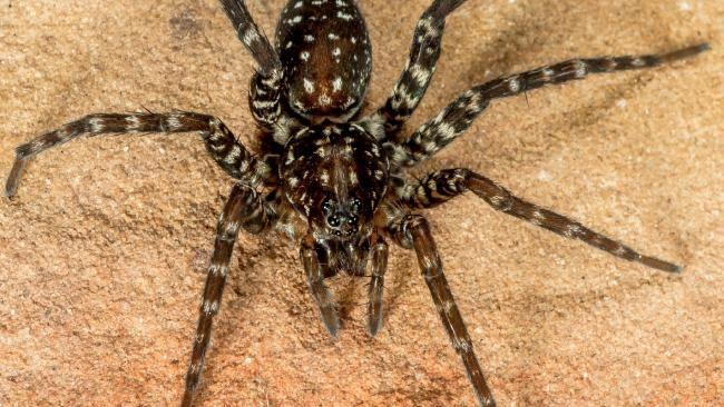 Man burns down apartment while killing spider