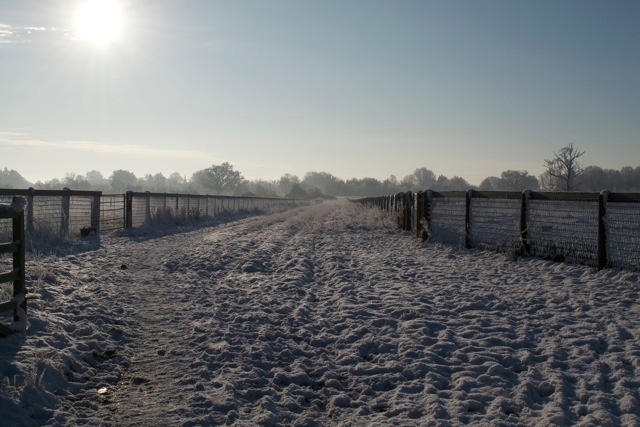The ride between the paddocks.