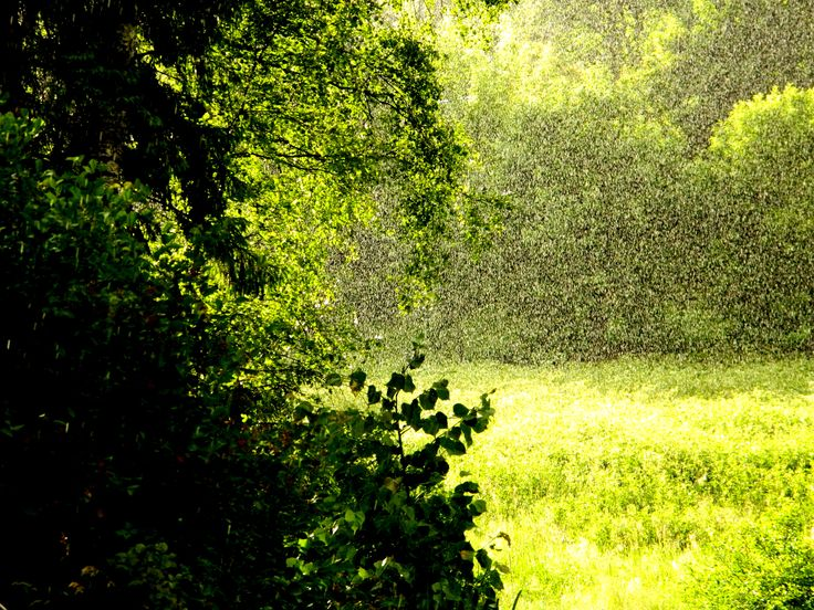 Summer Rain. by GabiJa1002