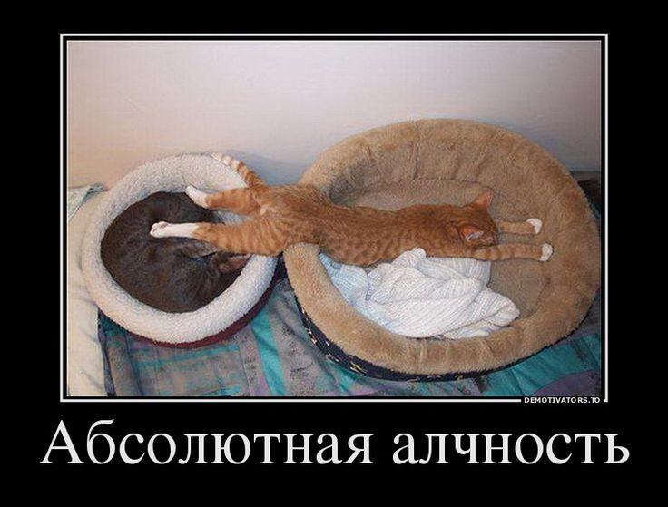 Алчный кот
