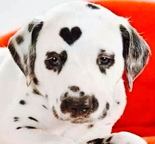 1000+ Images About ANIMALS WITH UNUSUAL MARKINGS On