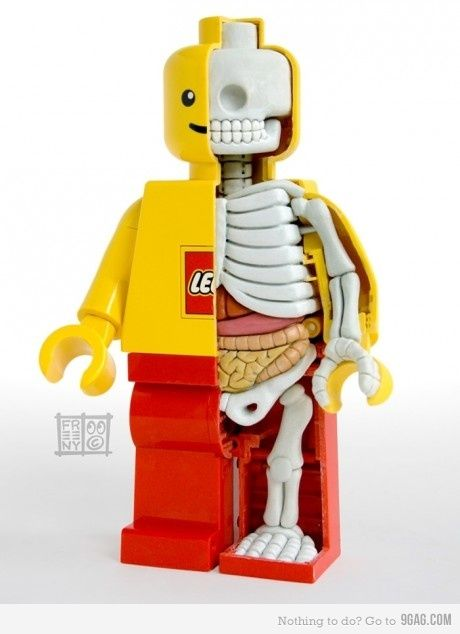 surviving-science:  lego anatomy