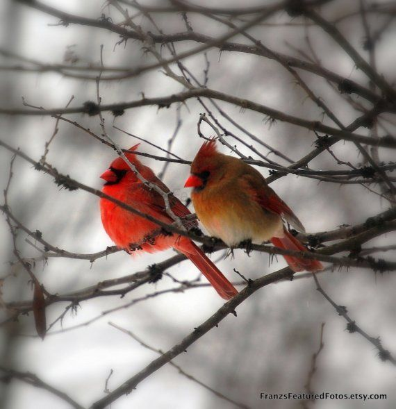 Image result for wildlife, winter,have a nice thursday, images