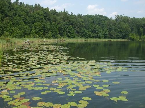 Lake (Barlinek, Poland)