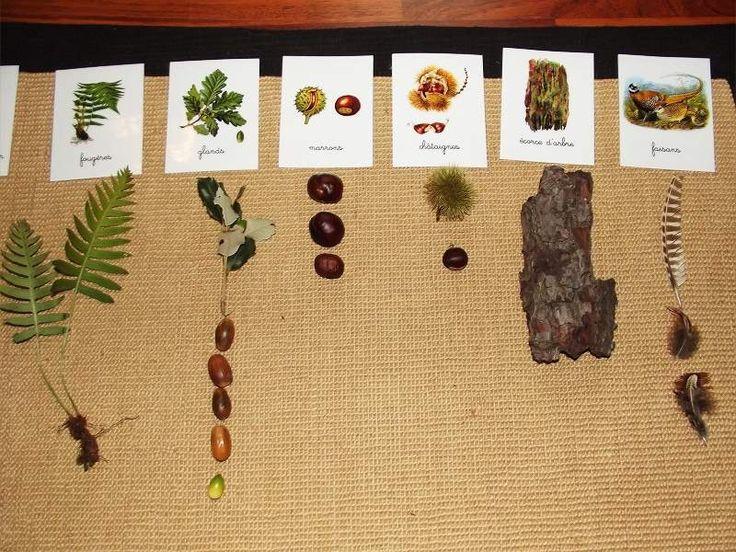 Forêt associé les éléments du plateau aux cartes nomenclatures