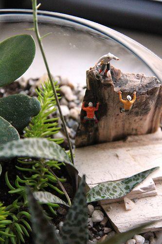 Twig Terrariums!