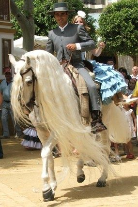 Andalusian horse during an anual festival, so graceful
