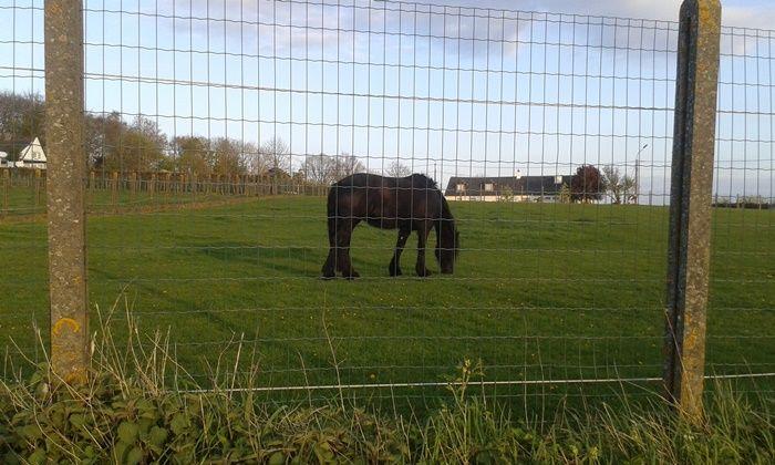 My bike trip - Tiegem is een dorpje in de Belgische provincie West-Vlaanderen en een deelgemeente van Anzegem.