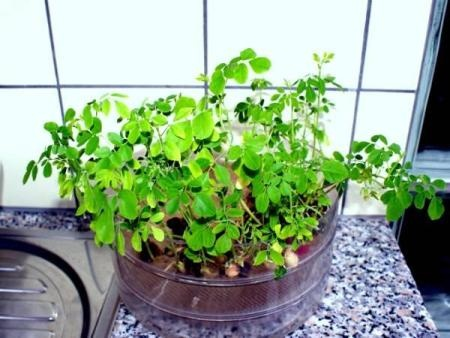100 Seed, 100 Samen, 100 Semilla.  good price