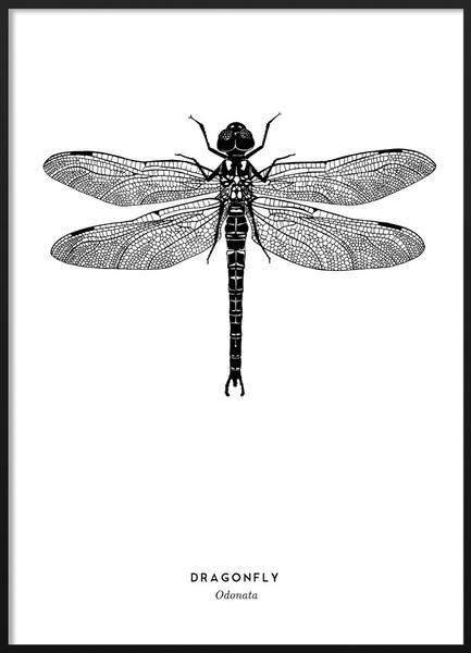 Dragonfly poster #blackandwhite #dragonfly #scandinavian #poster