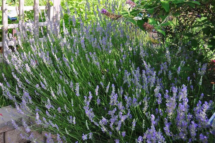 Want perennials that like sun bathing? Grow these high-powered beauties for fun in the sun.