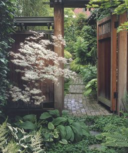 A roof-covered gate adds intrigue and serves as a focal point in this side yard. A white-leaved Japanese maple (Acer palmatum 'Ukigumo') brightens the area in front of the gate.