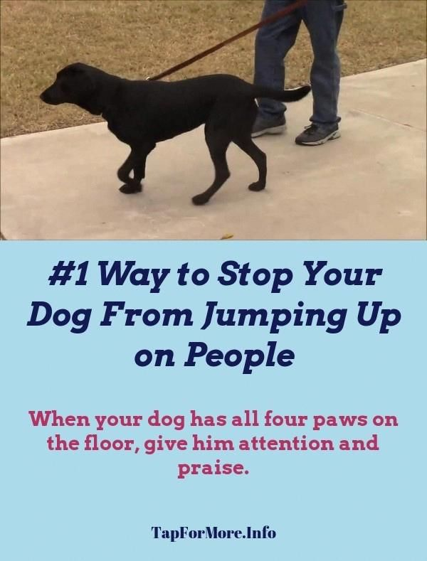 Stop Dog Jumping And How To Calm Down A Dog Check The Pin For