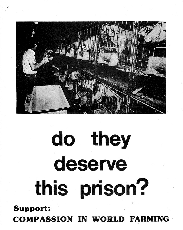 A hard hitting poster produced shortly after our foundation in 1967. Compassion in World Farming.