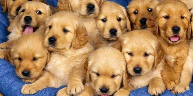 Dogs Puppies Shops In Dubai List Of Dogs Puppies Shops In