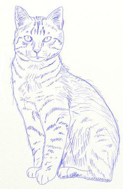Как научиться рисовать кота — Кошки шоу