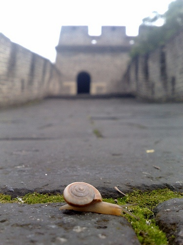Meditation on time at The Great Wall of China by Triston Wallace, via Flickr