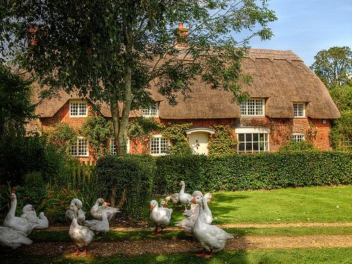 Thatched cottage and geese in the New Forest, Hampshire